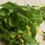 Mustard Greens — An Easy to Grow Cool-Weather Crop
