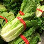 Do Not Eat Romaine Lettuce, Health Officials Warn