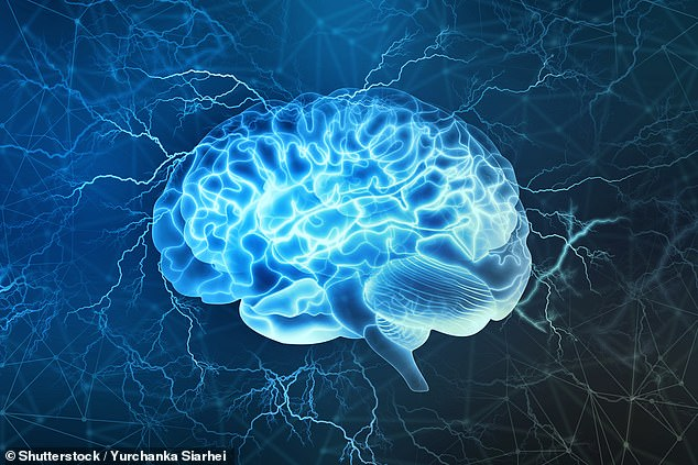 Researchers from the US and Netherlands compared brain size from MRI scans with cognitive performance and educational achievements. People with larger brains also have better memory, logic and reactions, scientists have found (stock)