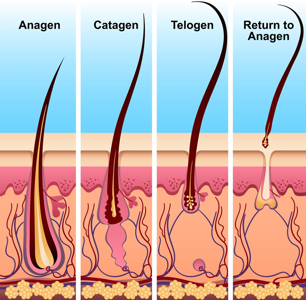causes of hair loss Nourkrin